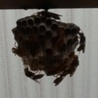驚き! ~蜂の巣~