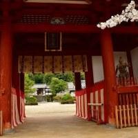 太子町・叡福寺のサクラ風景・・・2