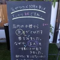 10/15の黒板ボード☆犬??