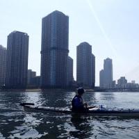 東京水路経験者コース、ソメイヨシノは来週以降が見頃。