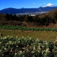 大井町冬の夢の郷