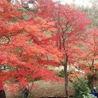 京都ニュース - 2