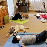 第2回 Gog Yoga教室を開催(おうちCafeわんこ堂)
