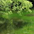 五色沼自然探勝路の夏色