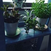 観葉植物との暮らし方