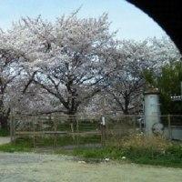 4月7日(木)雨