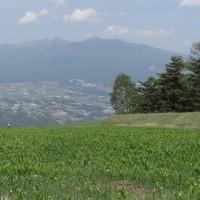 ドイツスズラン畑と八ヶ岳