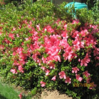 5月の庭の花木