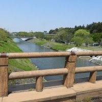 水戸の川ベを散歩する-沢渡川