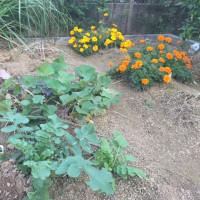 晩秋の菜園