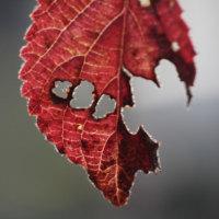 ♪枯れ葉よー♪ 枯れ葉の装い