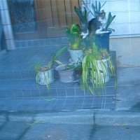 鉢植えネコちゃん