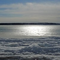 海凍っても私以外は元気だね