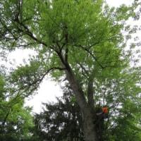 米国『SAVE TREE』事情