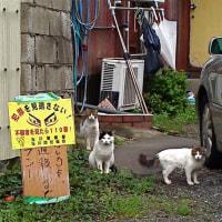 Cat patrol 見回りニャンコ警ら