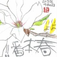 4月4日 桜満開