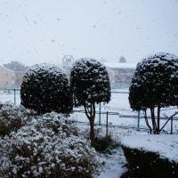 初雪でした