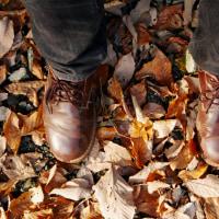 日向薬師の紅葉深まる・初冬の森で昼飯を喰う