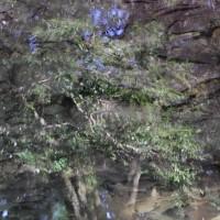 水面の映りこみ 上下反転