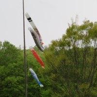 鯉のぼり、 県立三木山森林公園