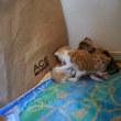 生後二十日目の猫