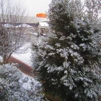 久し振りの雪