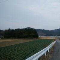 1月19日の散歩 暑かった