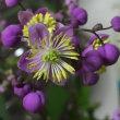上品な紫花