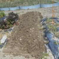 畝を一本耕しました