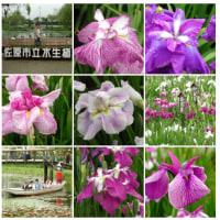20000625佐原水生植物園01