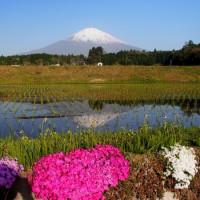 富士山が見える棚田・茶畑を巡る(静岡県・御殿場市の「塚原の棚田」)