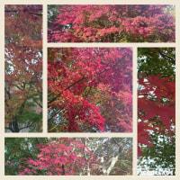 紅葉・青空・海辺
