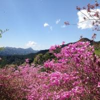 奥武蔵 越上山(おがみやま)