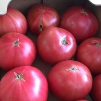 箱トマトでました!