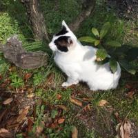 くーさん、庭で遊ぶ