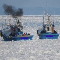 流氷と闘っている羅臼漁船