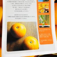 あさやんさんからの贈り物~因島のハッサク