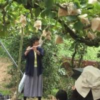 梨に聴かせます。