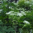 萌木の村は花いっぱい