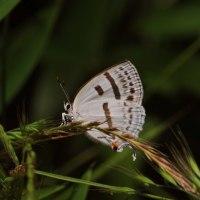 路傍脇の蛾とチョウ 蛾の美しさ