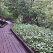 夏のプチ気まま旅 10日目(奥日光・散歩・帰宅)