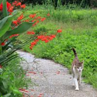 瀬戸内C島の猫たち 2016年 7月 その18