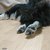 バンビちゃんのような足なんだっス! そーなんだー!けっこう汚れてるけどねー! 良いんだっス!