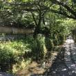 京都・夏の心象風景  〜  哲学の道