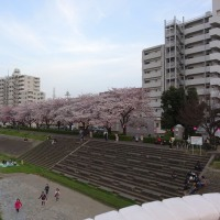 桜も満開に