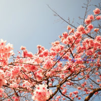 愛里跨の12星座monthly占い(3/21~4/20)