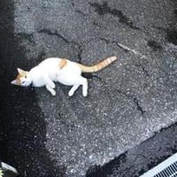 続・子ニャンの賛歌 ~チビ追悼~
