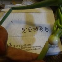 ニンニク2017:収穫中 ~掘り遅れて玉割れ