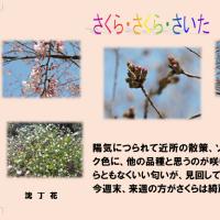 桜・もうすぐ・見ごろ
