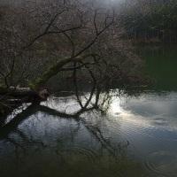 いつもの池で